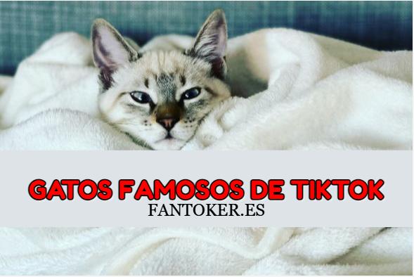 8 Gatos más famosos en Tiktok