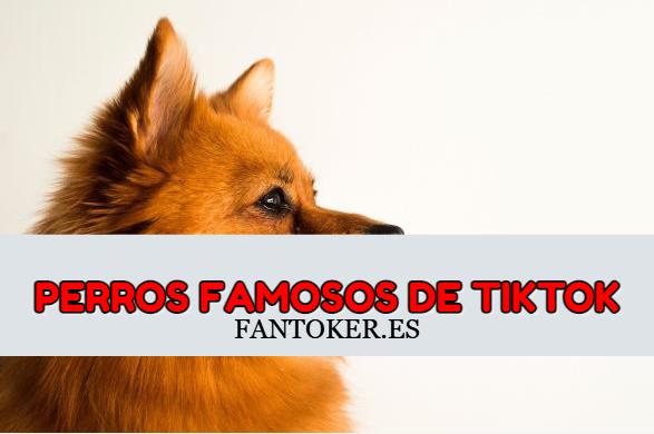 8 Perros más famosos de Tiktok